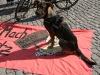 nazis-blockieren-grosser-antinazihund_marco-wagner