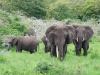 Elefanten im Gruenen