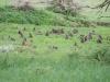 Paviane auf der Spielwiese