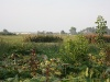 Ukrainische Felder