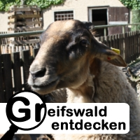 greifswald entdecken sumpfbiber ziegen und co im. Black Bedroom Furniture Sets. Home Design Ideas