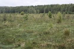 So schaut ein entwässertes Moor aus