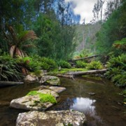 Sandspit_River_Wielangta_Forest-200-wikipedia