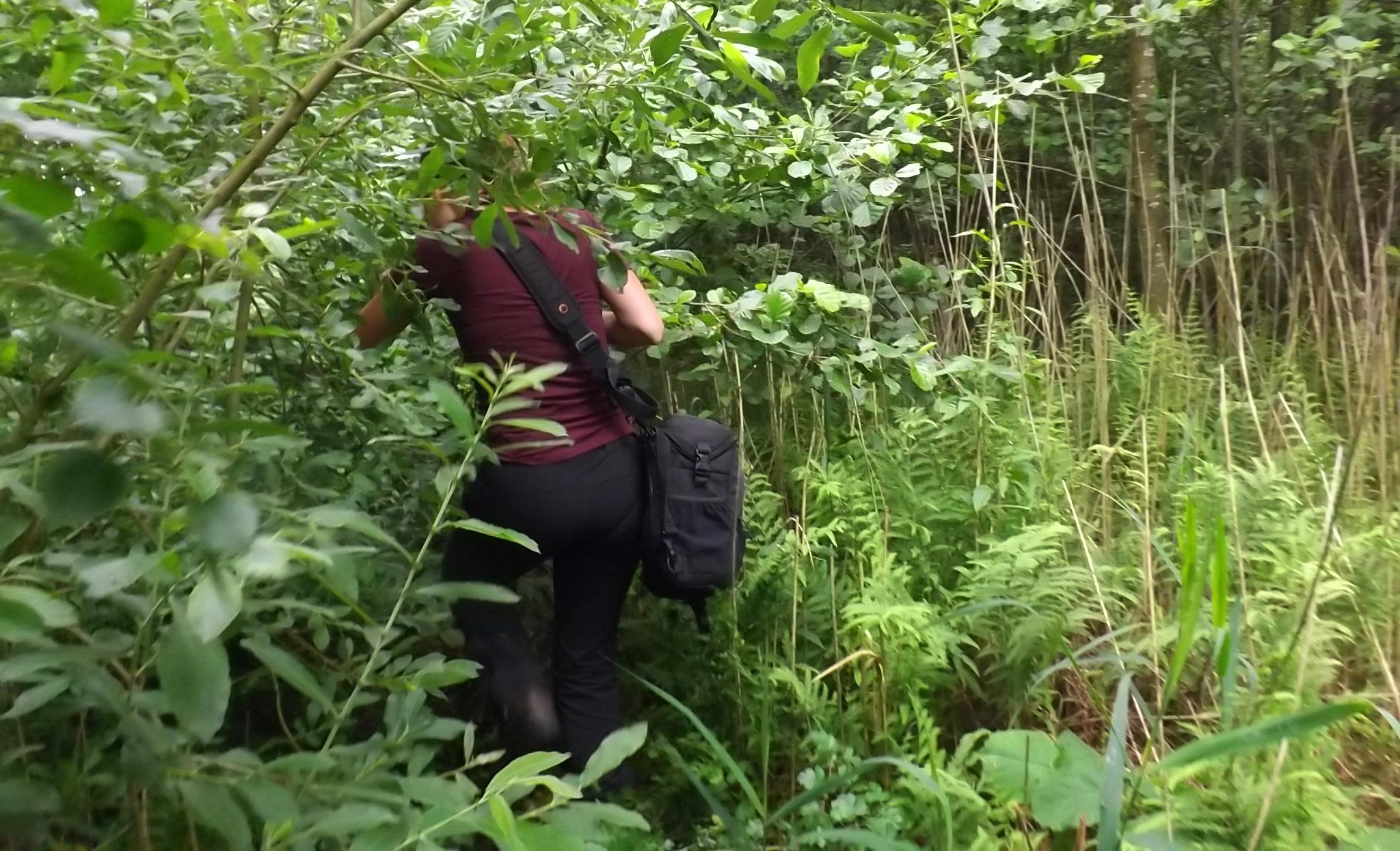Auf Lamarcks Spuren durch das gefährdete Kieshofer Moor