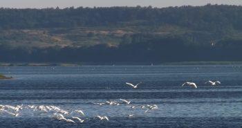 Zwischen Kreuzotter und FKK – ein Ausflug nach Hiddensee