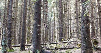 Wie man durch den Thüringer Wald wandert