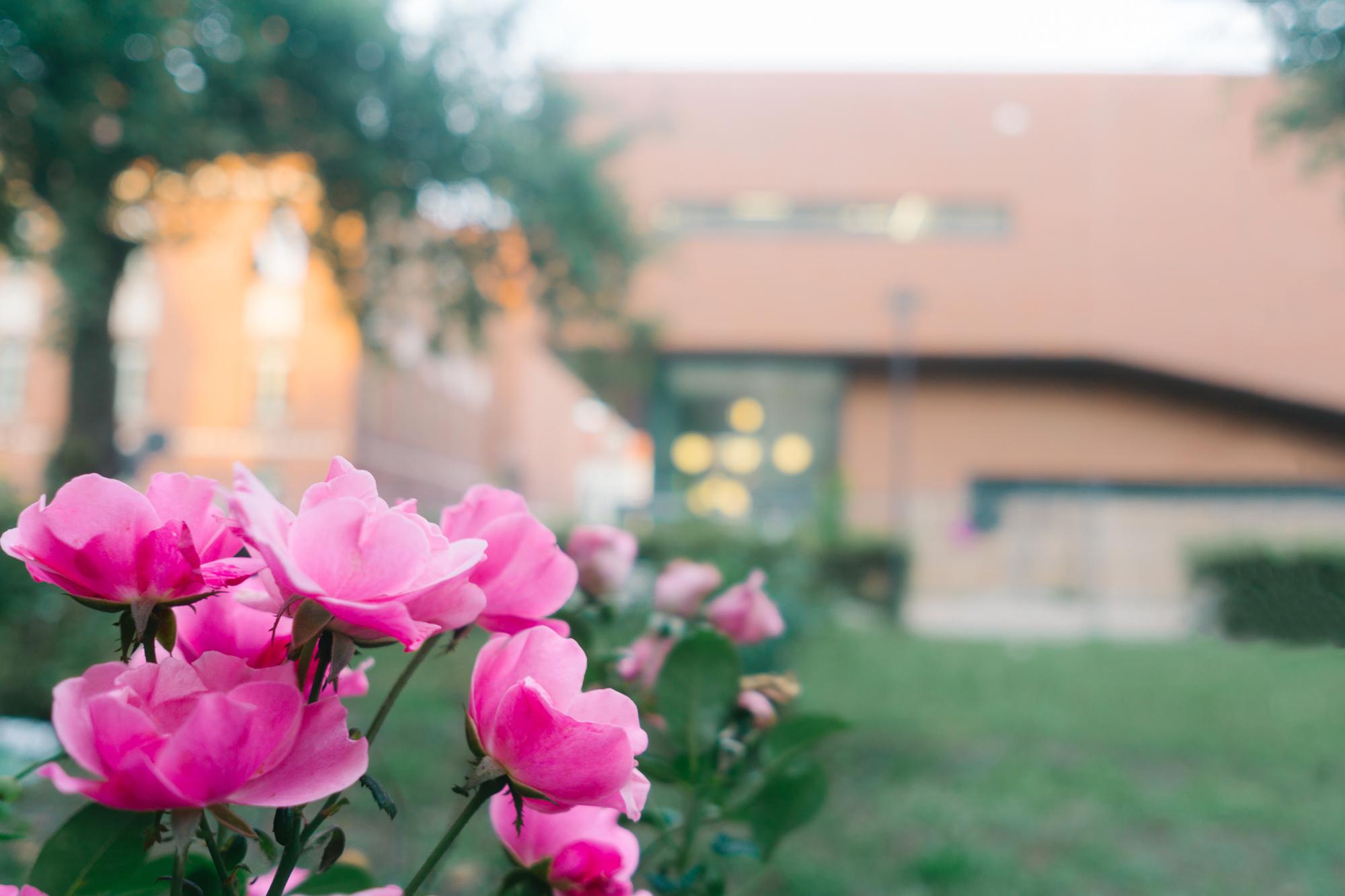 Der neue Campus