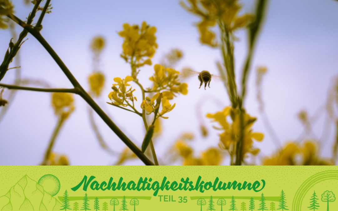 Save the bees: Übernimm doch eine Bienenpatenschaft!