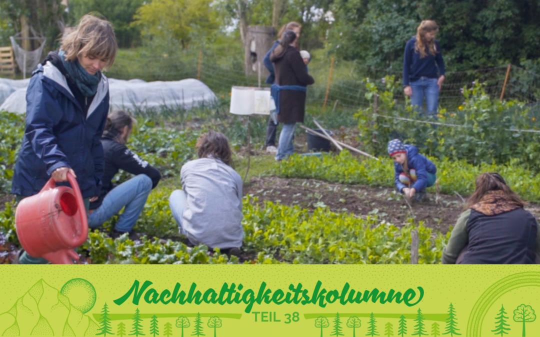 """""""WildeMöhre"""" – ein Solawi-Projekt bei Greifswald"""