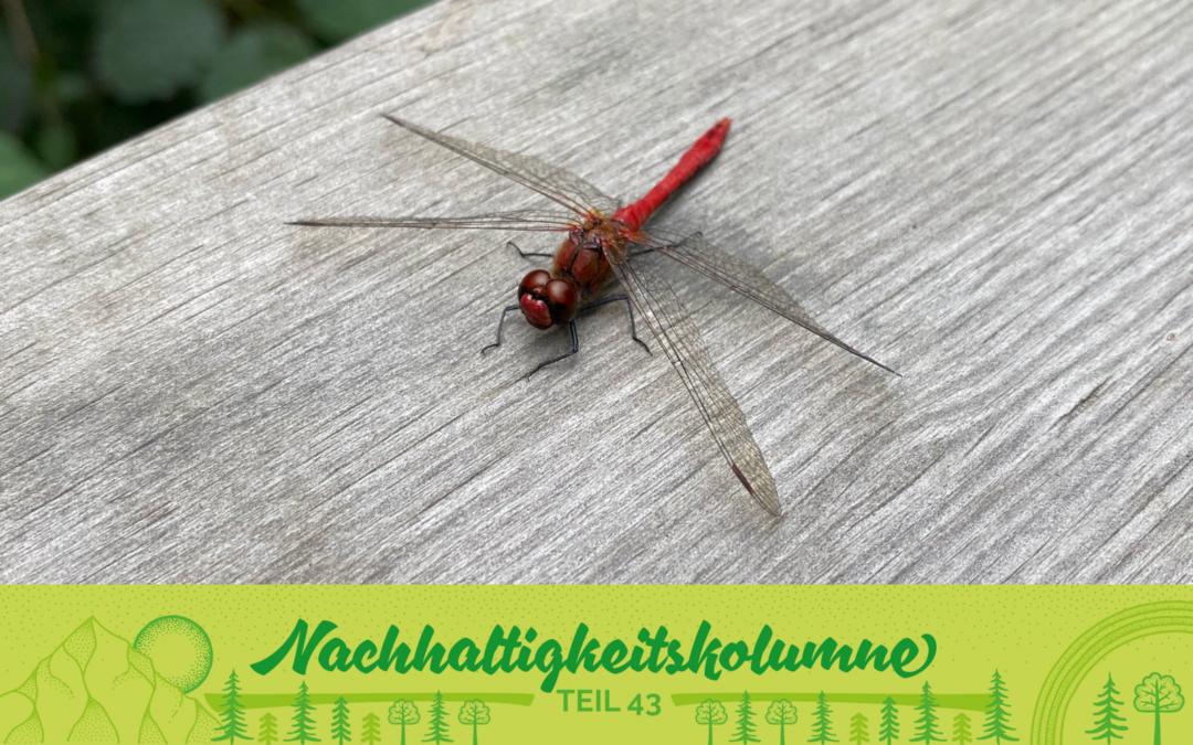 Insekten: kleine Lebensretter in Lebensgefahr