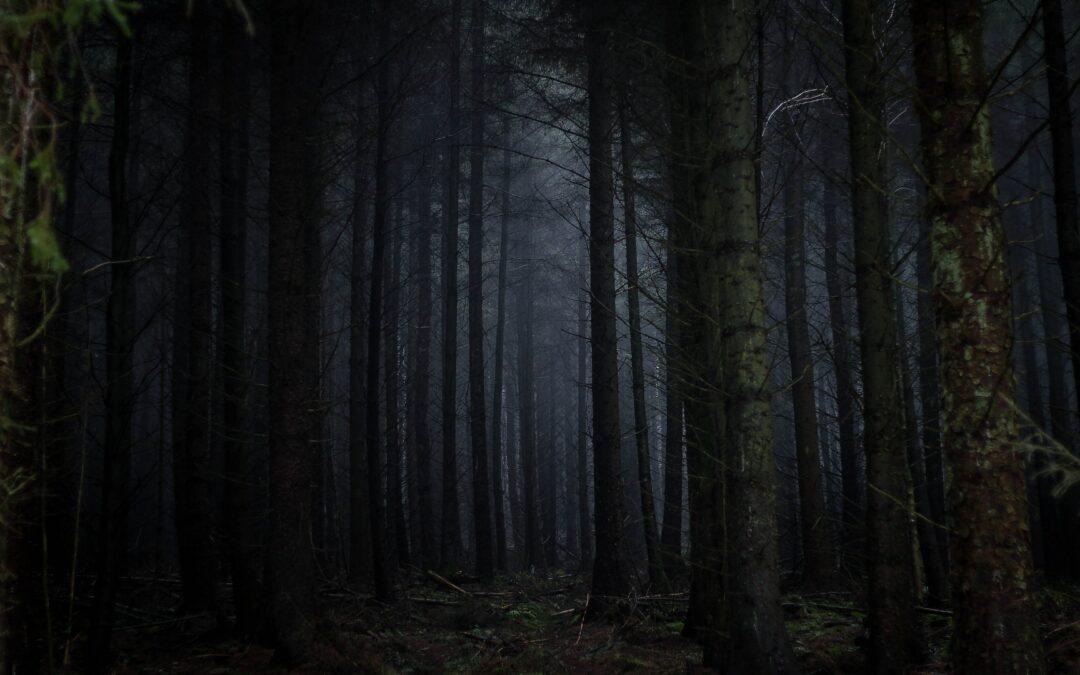 Verlaufen im Wald – Du entscheidest!