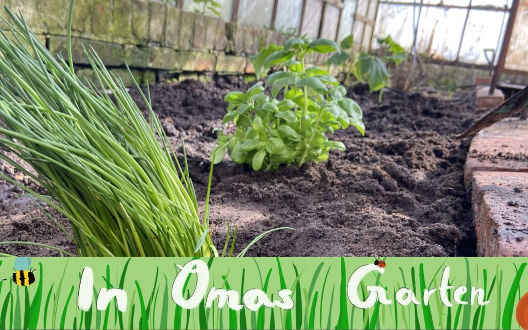 Kräutertopf fürs Küchenfenster – In Omas Garten